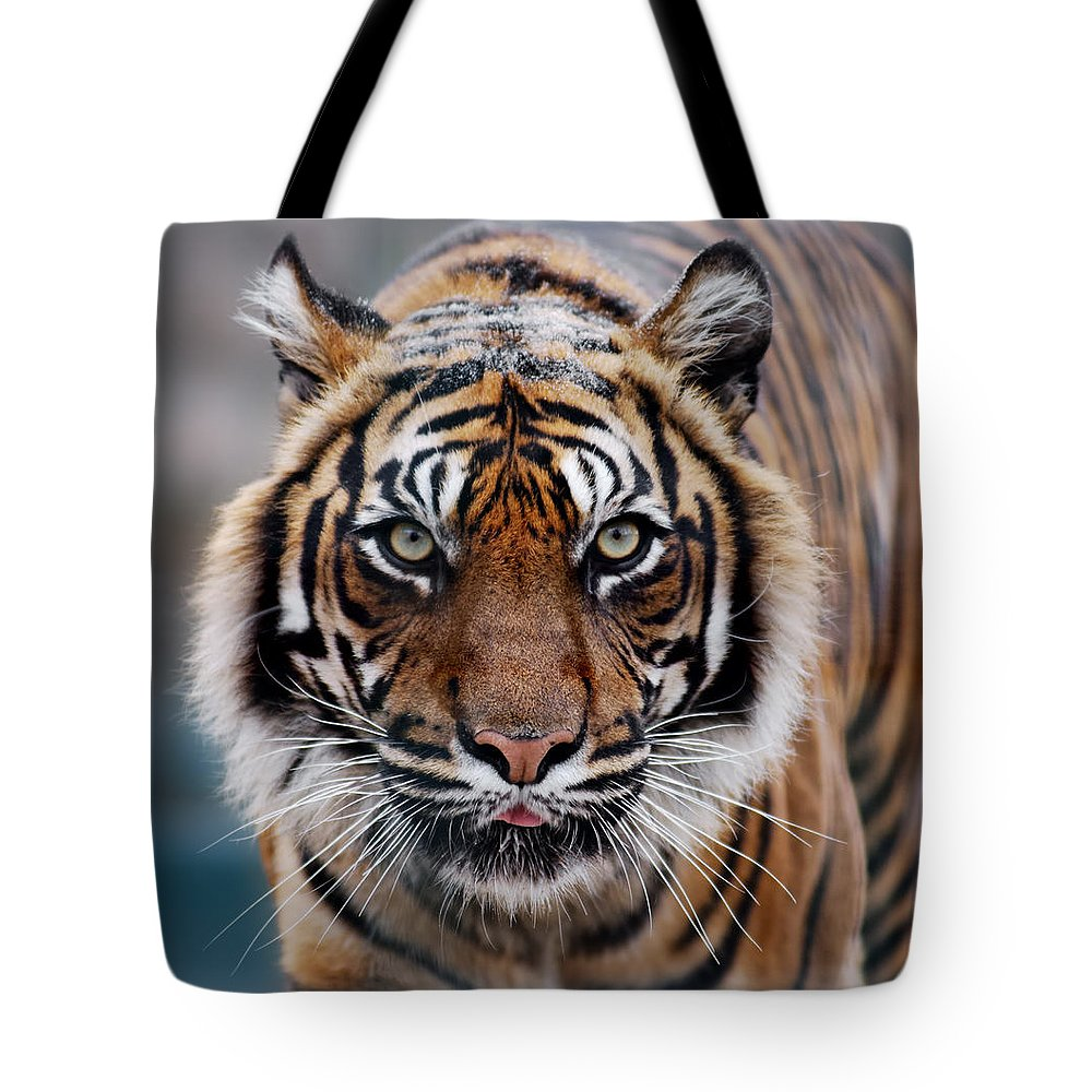 Snow Tote Bag featuring the photograph Tiger by Freder