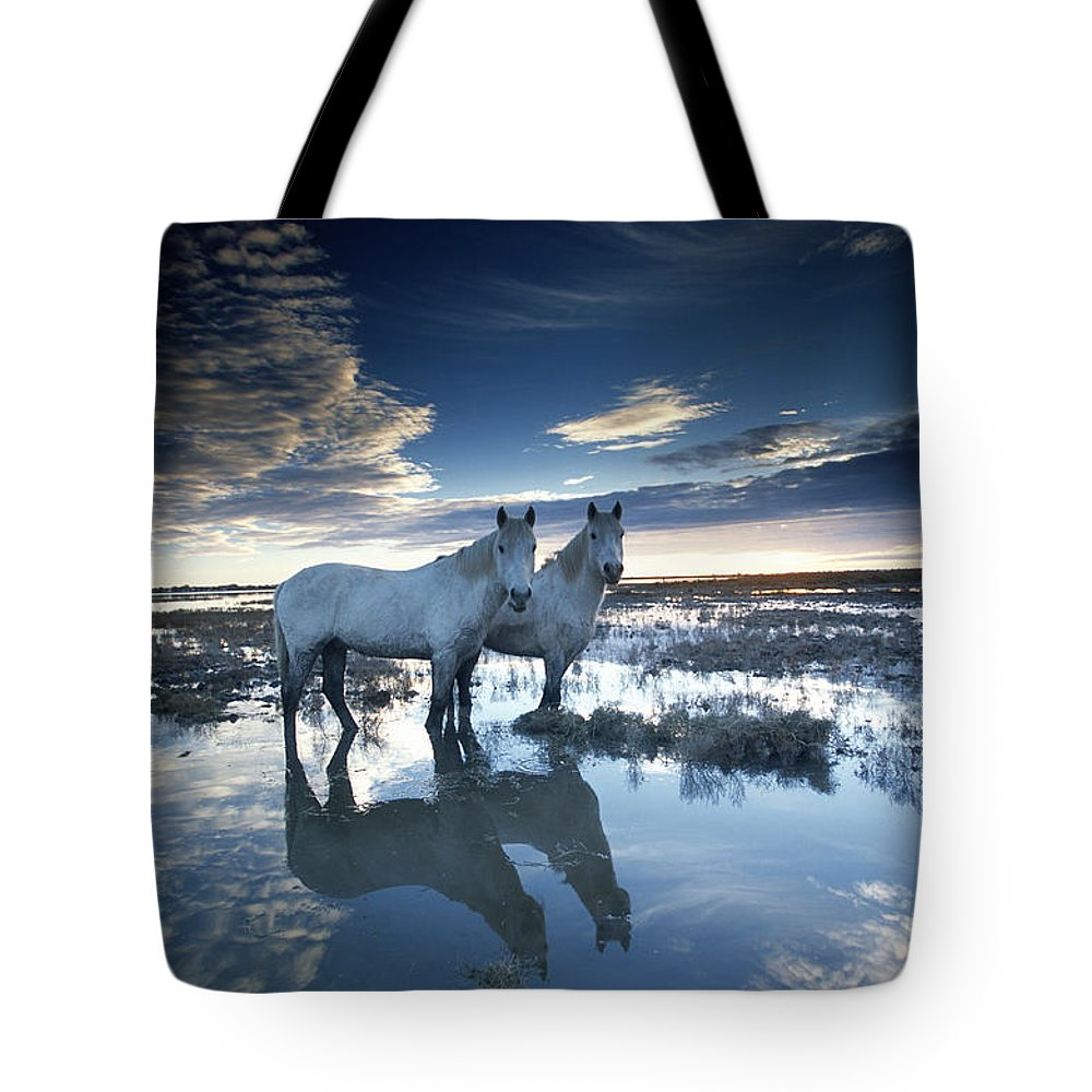 Horse Tote Bag featuring the photograph Wild Horses Equus Caballus, France by Art Wolfe