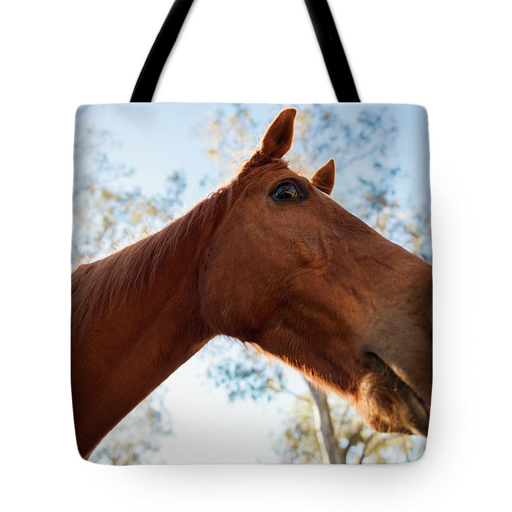 Animal Tote Bag featuring the photograph Horse In A Countryside by Rob D Imagery