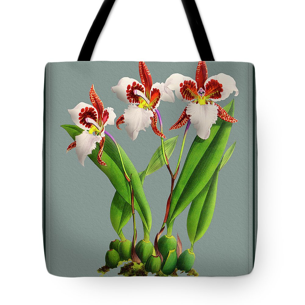 Vintage Tote Bag featuring the drawing Orchid Vintage Print On Tinted Paperboard by Baptiste Posters