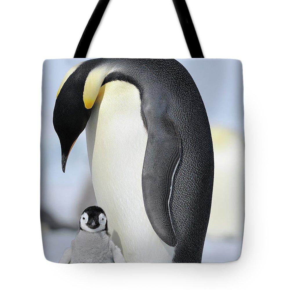 Emperor Penguin Tote Bag featuring the photograph Emperor Penguin by Raimund Linke