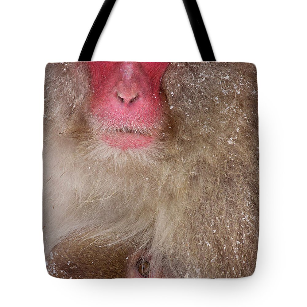 Vertebrate Tote Bag featuring the photograph Japanese Macaques, Japanese Alps by Mint Images/ Art Wolfe