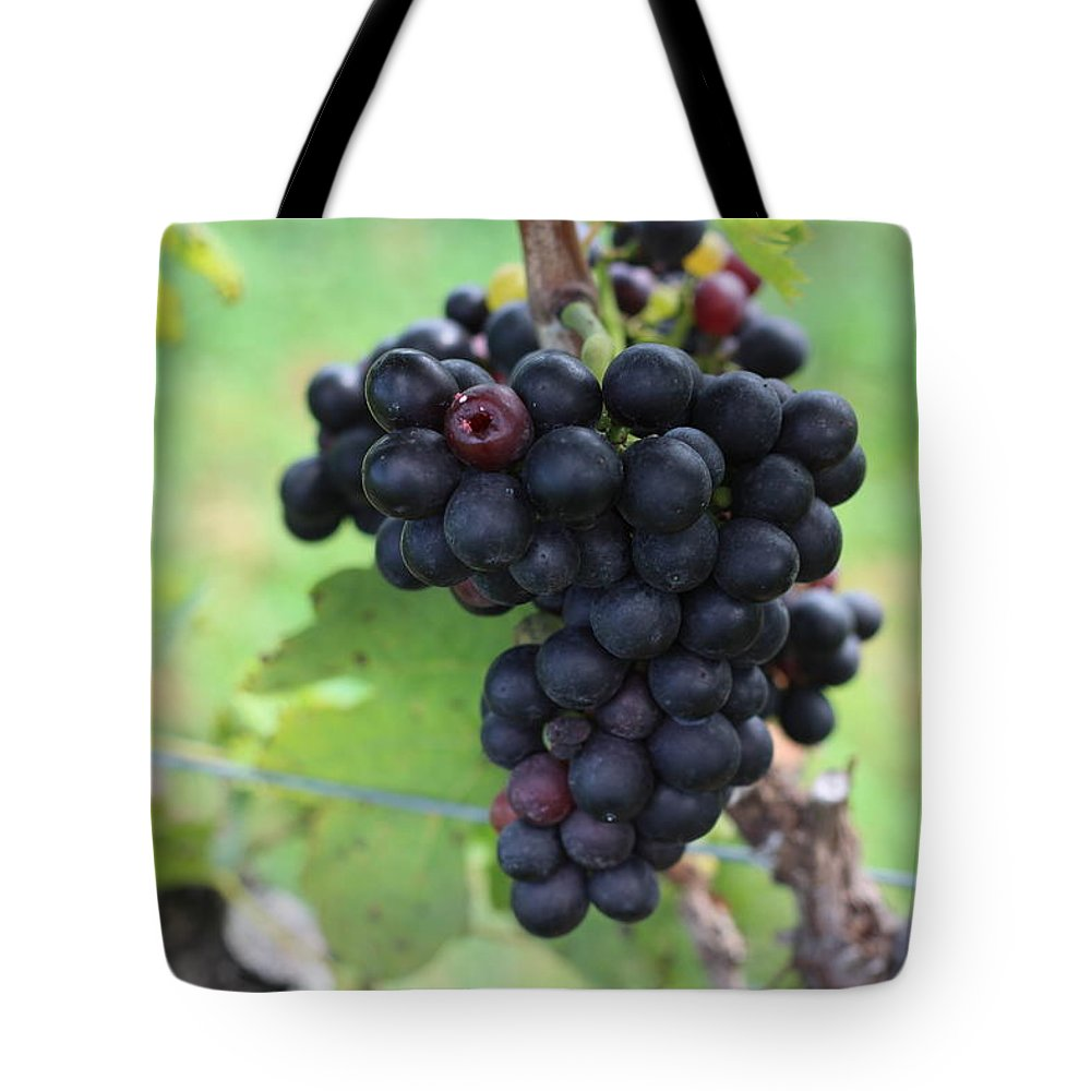 Vineyard Tote Bag featuring the photograph Purple Grape Bunches 17 by Cathy Lindsey
