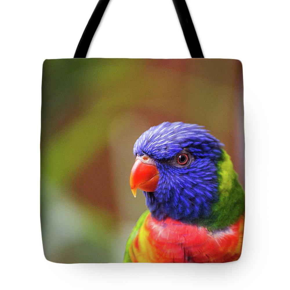 Bird Tote Bag featuring the photograph Rainbow Lorikeet by Martin Newman