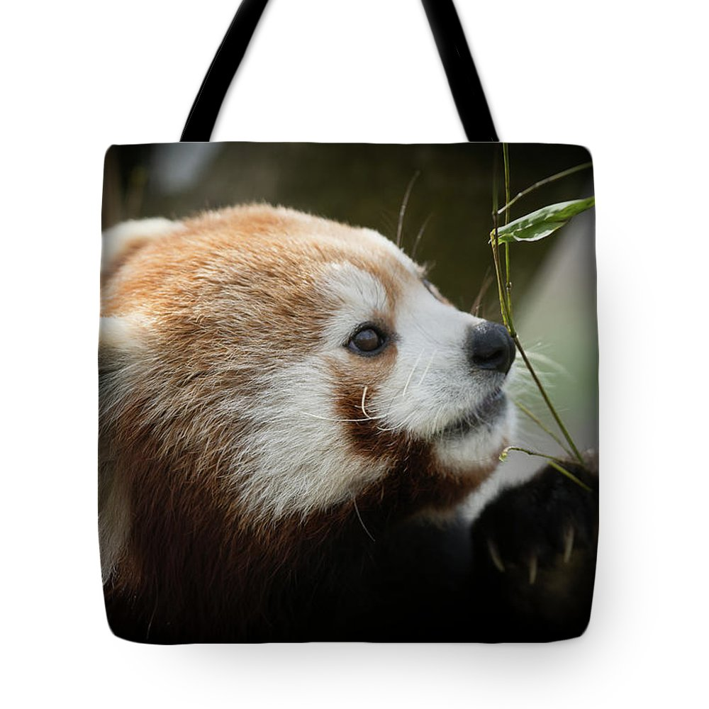 Red Tote Bag featuring the photograph Red Panda by Chris Boulton