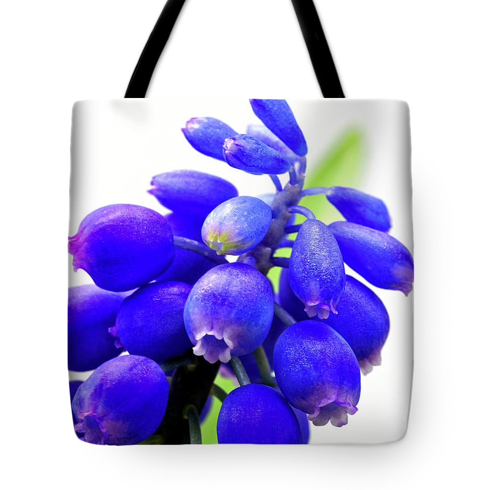 Tiny Tote Bag featuring the photograph blue bell flower cluster Grape hyacinth by Robert C Paulson Jr
