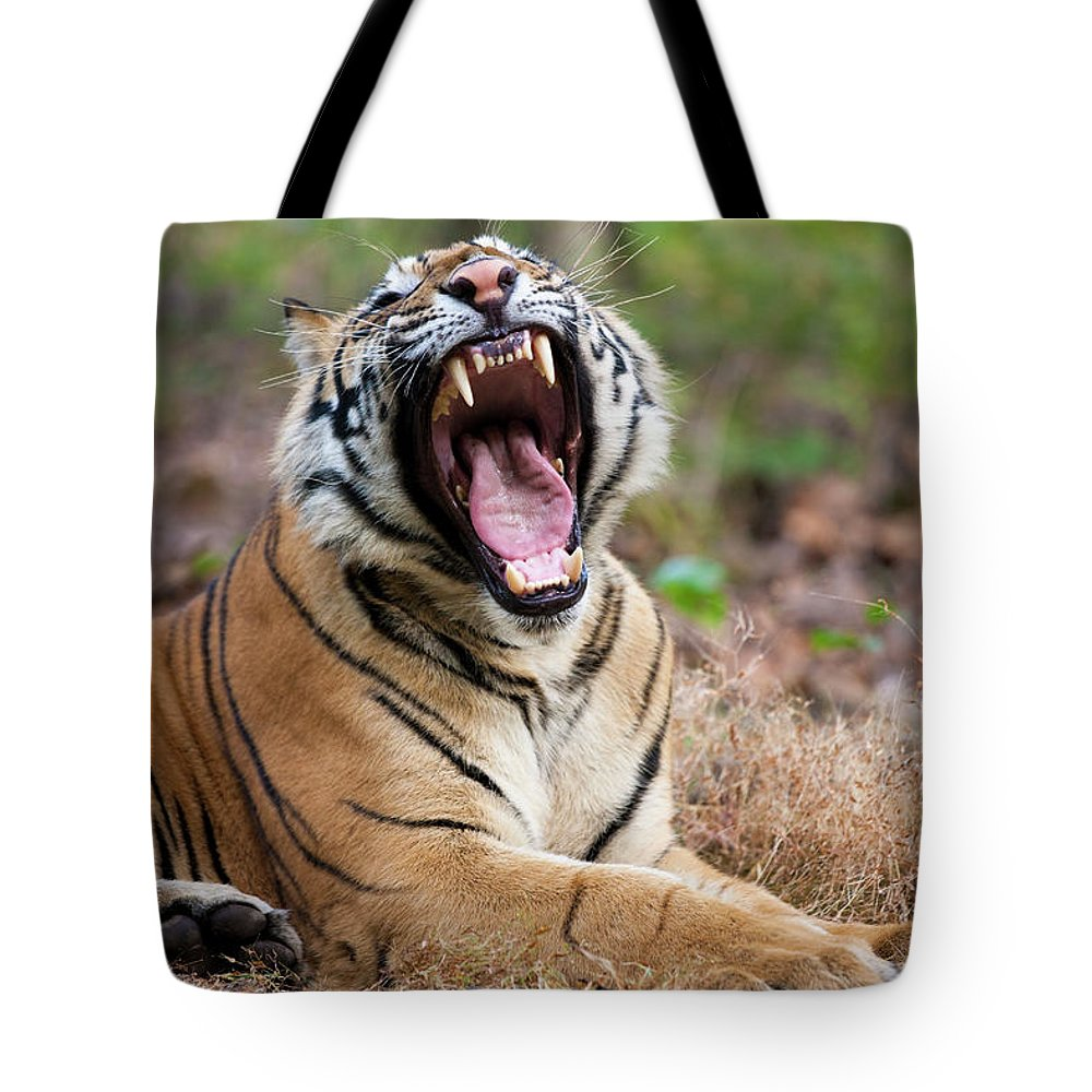 Snarling Tote Bag featuring the photograph An Adult Tiger In Bandhavgarh National by Mint Images - Art Wolfe