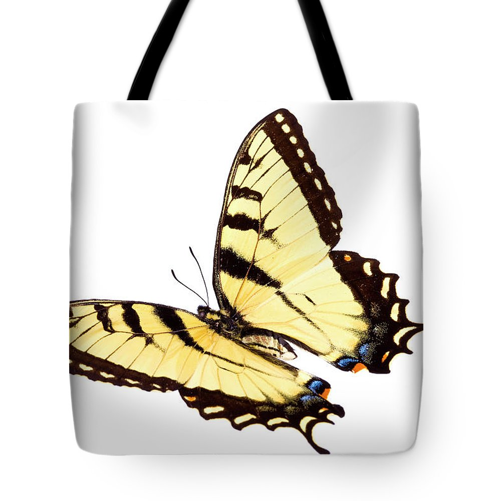 Orange Color Tote Bag featuring the photograph Butterfly by Liliboas