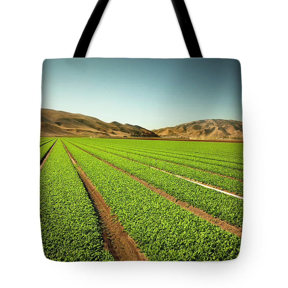 Environmental Conservation Tote Bag featuring the photograph Crops Grow On Fertile Farm Land by Pgiam
