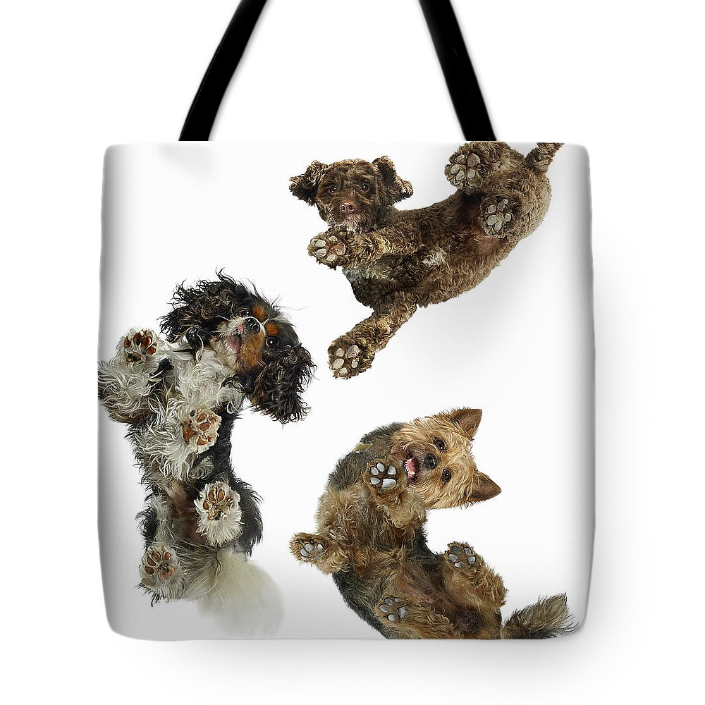 White Background Tote Bag featuring the photograph 3 Dogs Looking Down by Gandee Vasan