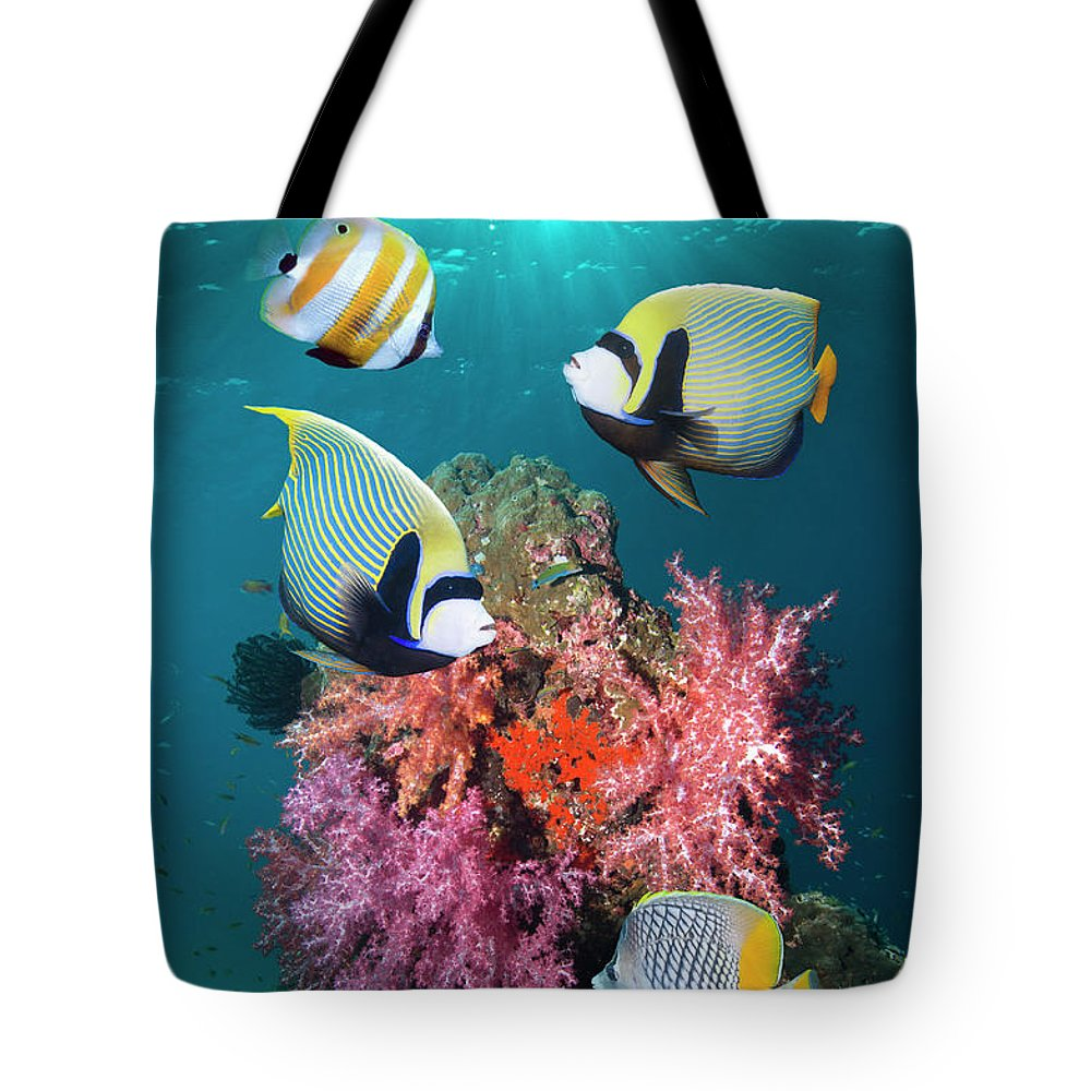 Tranquility Tote Bag featuring the photograph Tropical Coral Reef Fish by Georgette Douwma