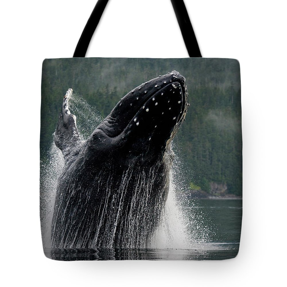 Animal Themes Tote Bag featuring the photograph Breaching Humpback Whale, Alaska by Paul Souders