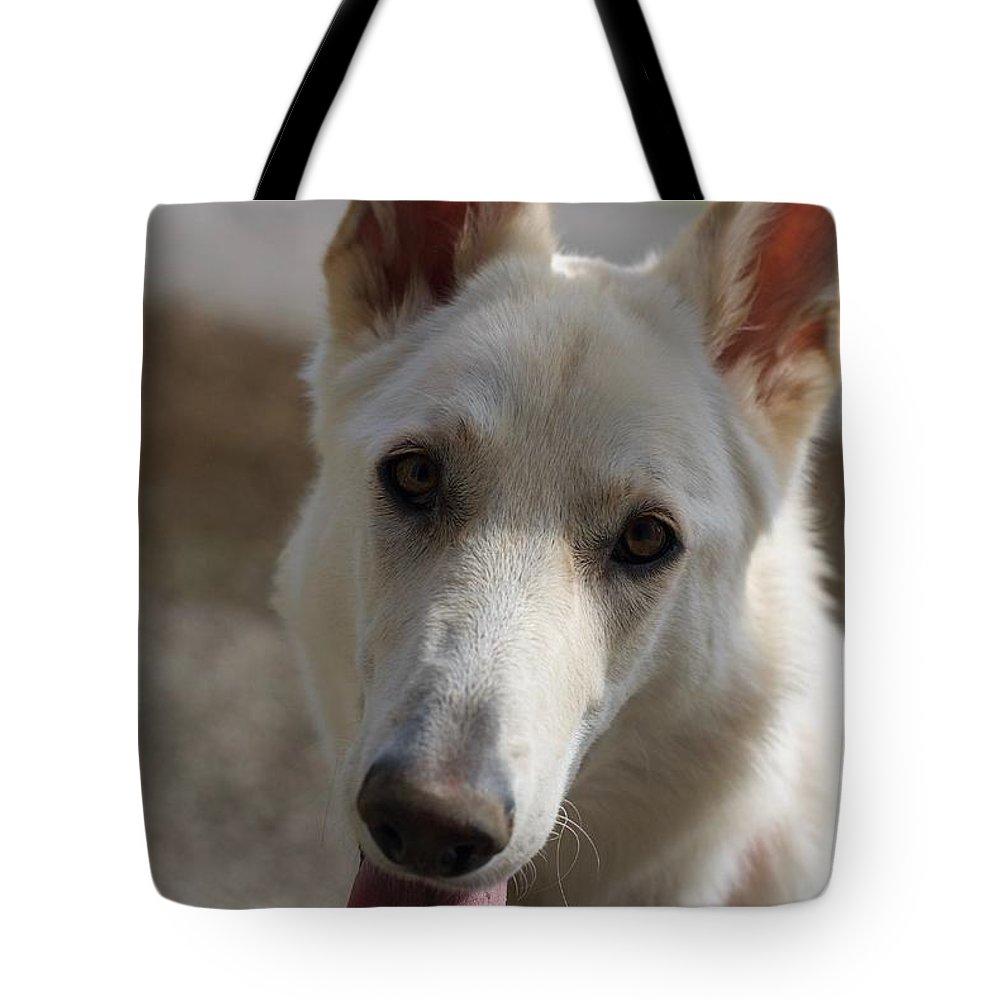 Dog Tote Bag featuring the photograph Dog Portrait by Veronique Dubois