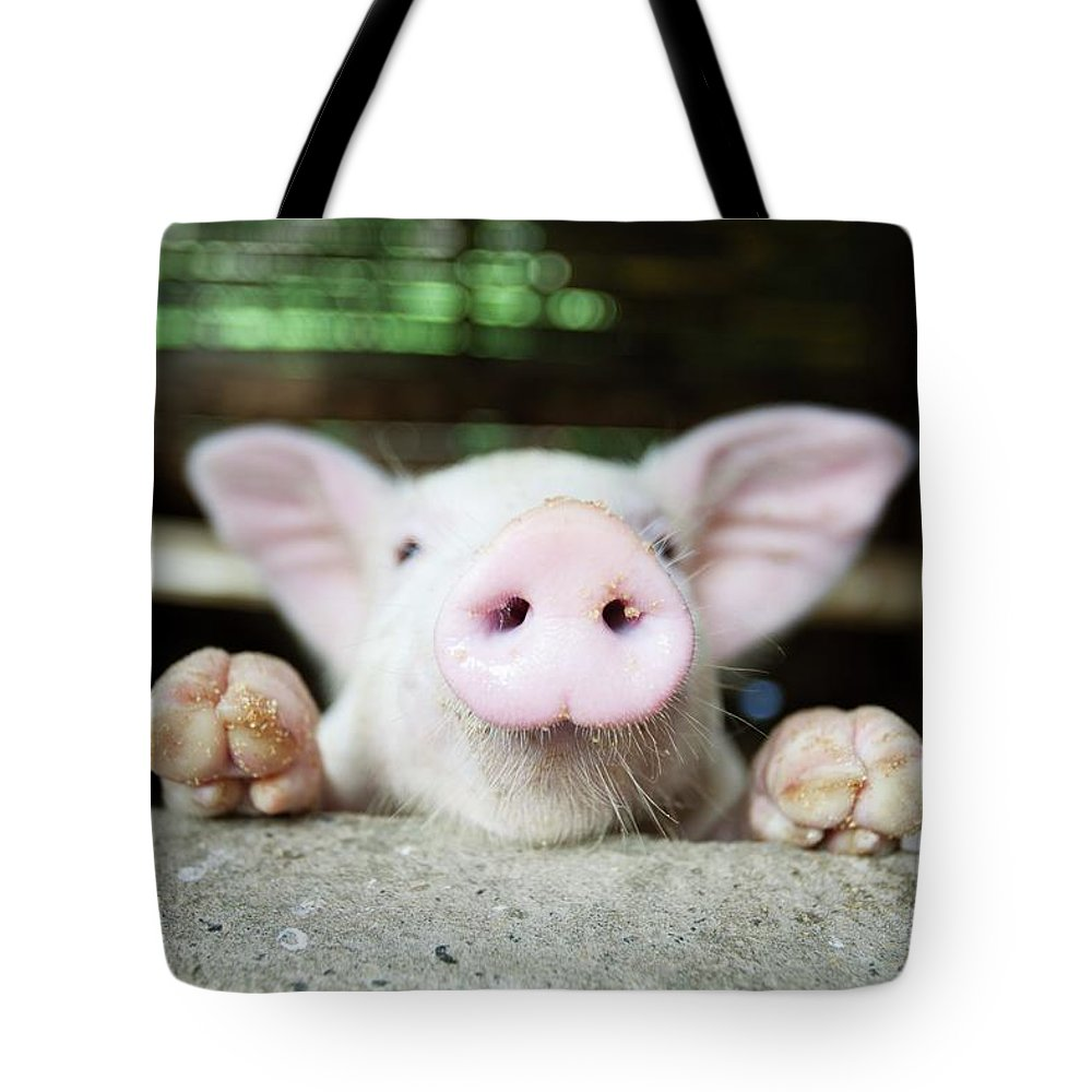 Negros Oriental Tote Bag featuring the photograph A Baby Pig In Its Pen by Design Pics / Deddeda