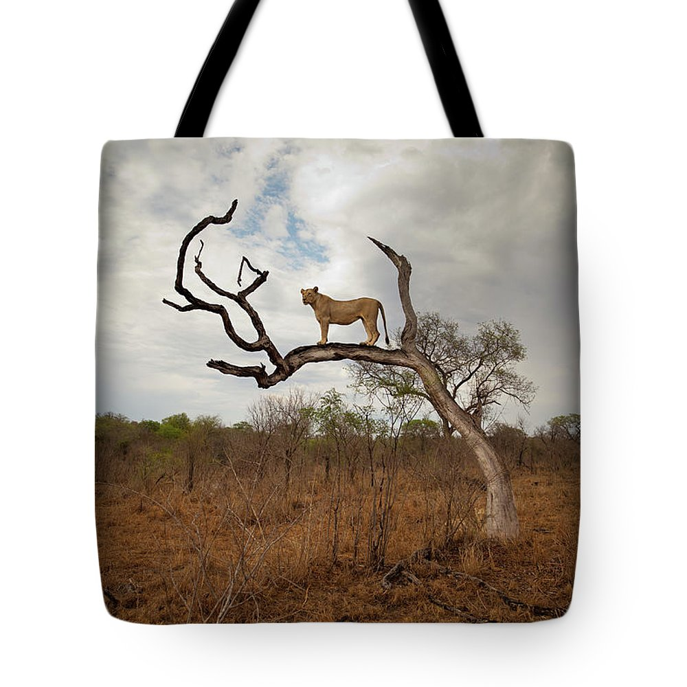 Scenics Tote Bag featuring the photograph A Female Lion Standing On Bare Branch by Sean Russell