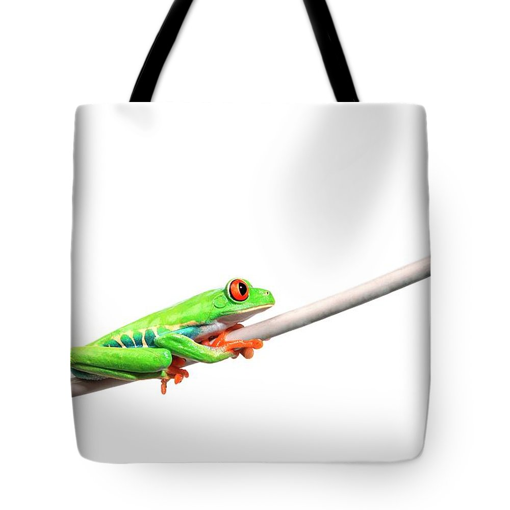 Rope Tote Bag featuring the photograph A Frog Hanging On by Design Pics/corey Hochachka