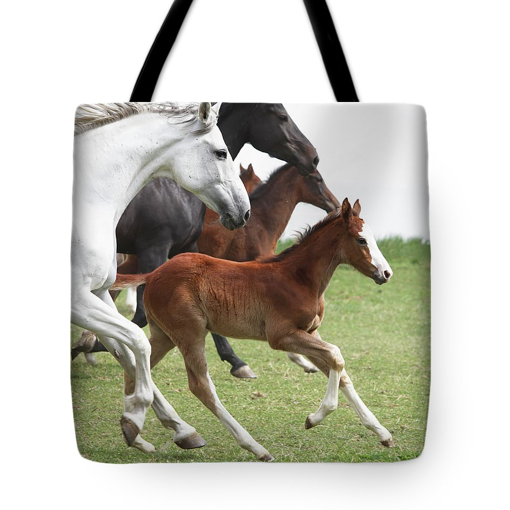 Horse Tote Bag featuring the photograph A Group Of Galloping Horses In An Open by Somogyvari