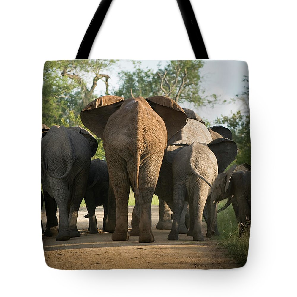 Cow Tote Bag featuring the photograph A Herd Of Elephants Heading Away From Us by Jono0001