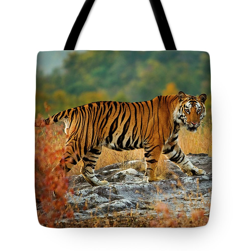 Vertebrate Tote Bag featuring the photograph A Large Tiger In Bandhavgarh National by Mint Images - Art Wolfe