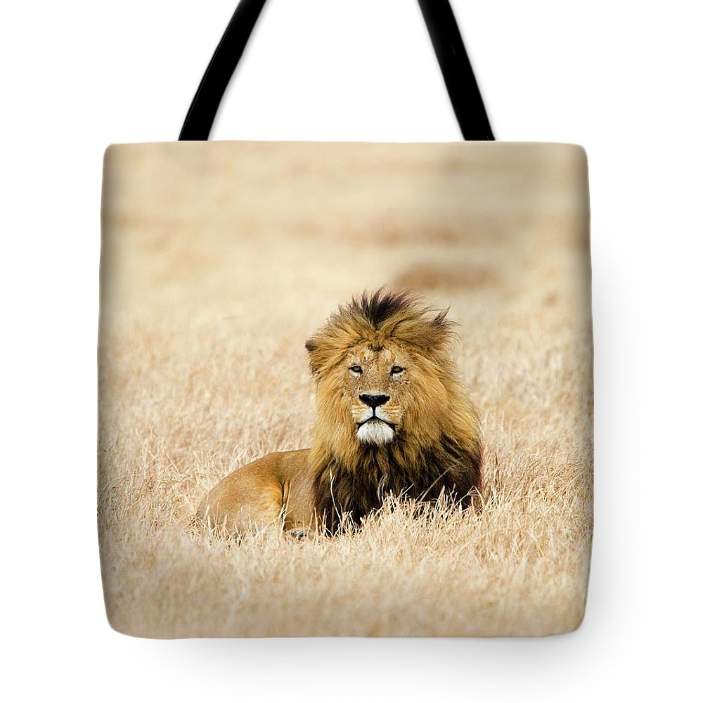 Grass Tote Bag featuring the photograph A Lion by Sean Russell
