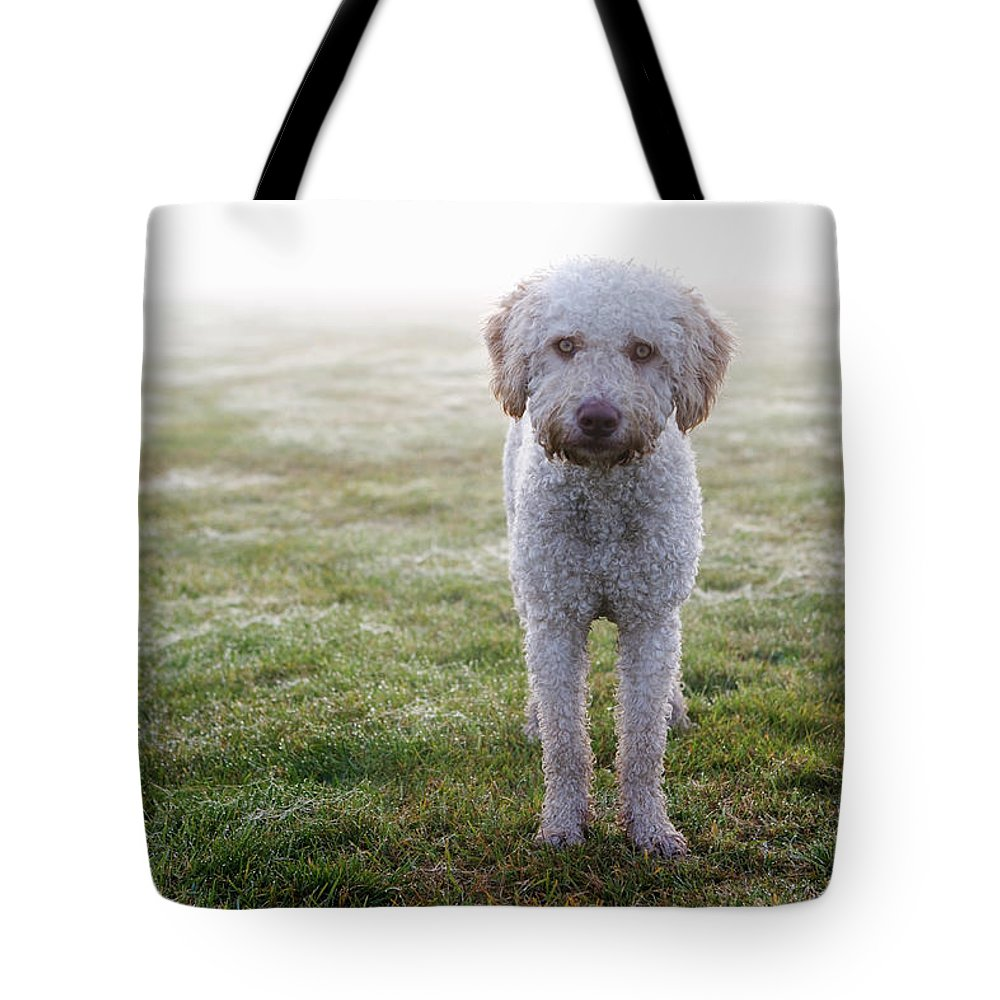 Pets Tote Bag featuring the photograph A Spanish Water Dog Standing A Field by Julia Christe