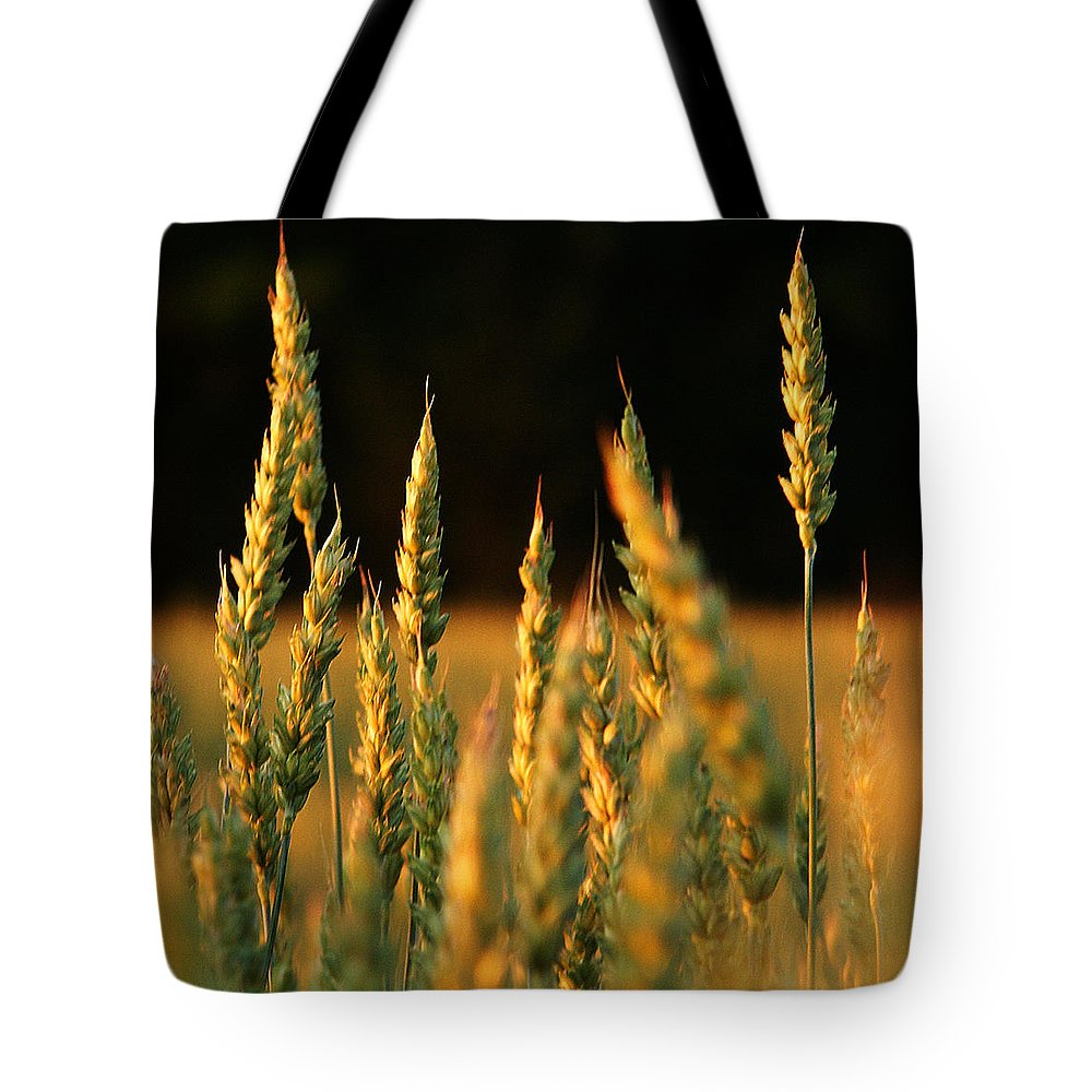 Bakery Tote Bag featuring the photograph A Wheat Field Towards The End Of The Day by Ssuni
