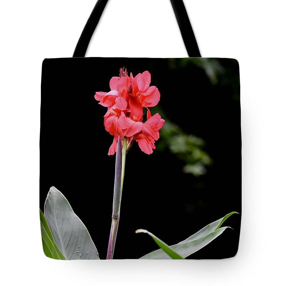 Colorful Flowers Tote Bag featuring the photograph Above The Rest by Laurie Hein