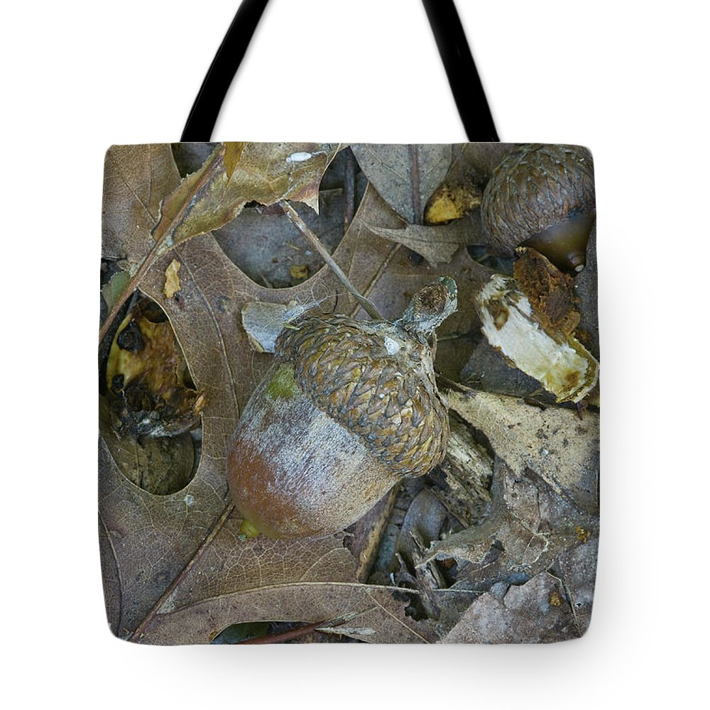 Acorn Tote Bag featuring the photograph Acorn - 2337 by Jerry Owens