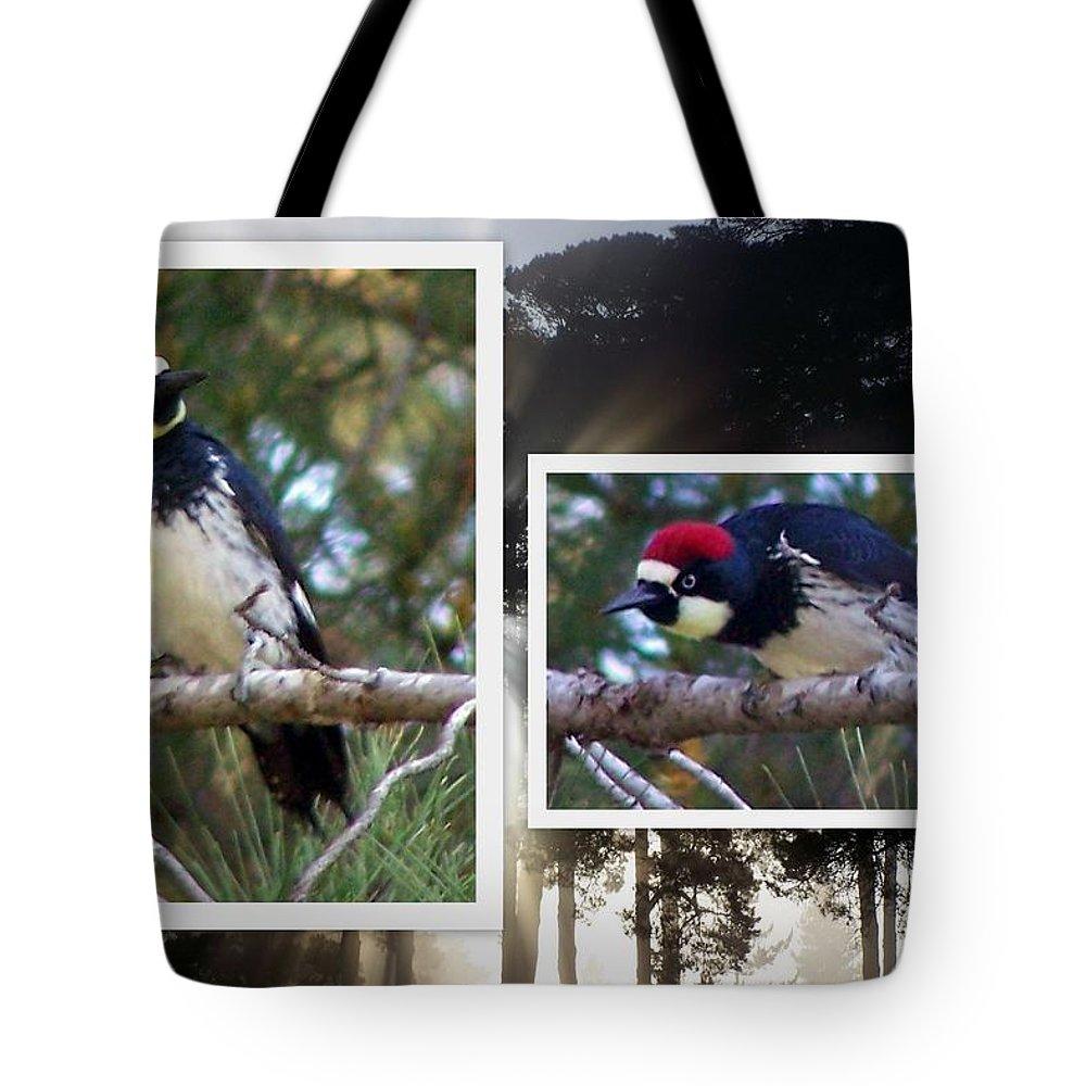 Woodpecker Tote Bag featuring the photograph Acorn Woodpecker by Linda Vanoudenhaegen