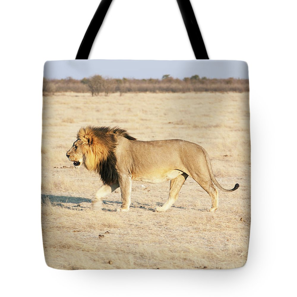 Animal Themes Tote Bag featuring the photograph African Lion On Savannah by Bjarte Rettedal