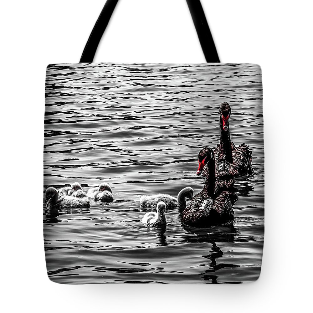 Cygnets Photographs Tote Bags