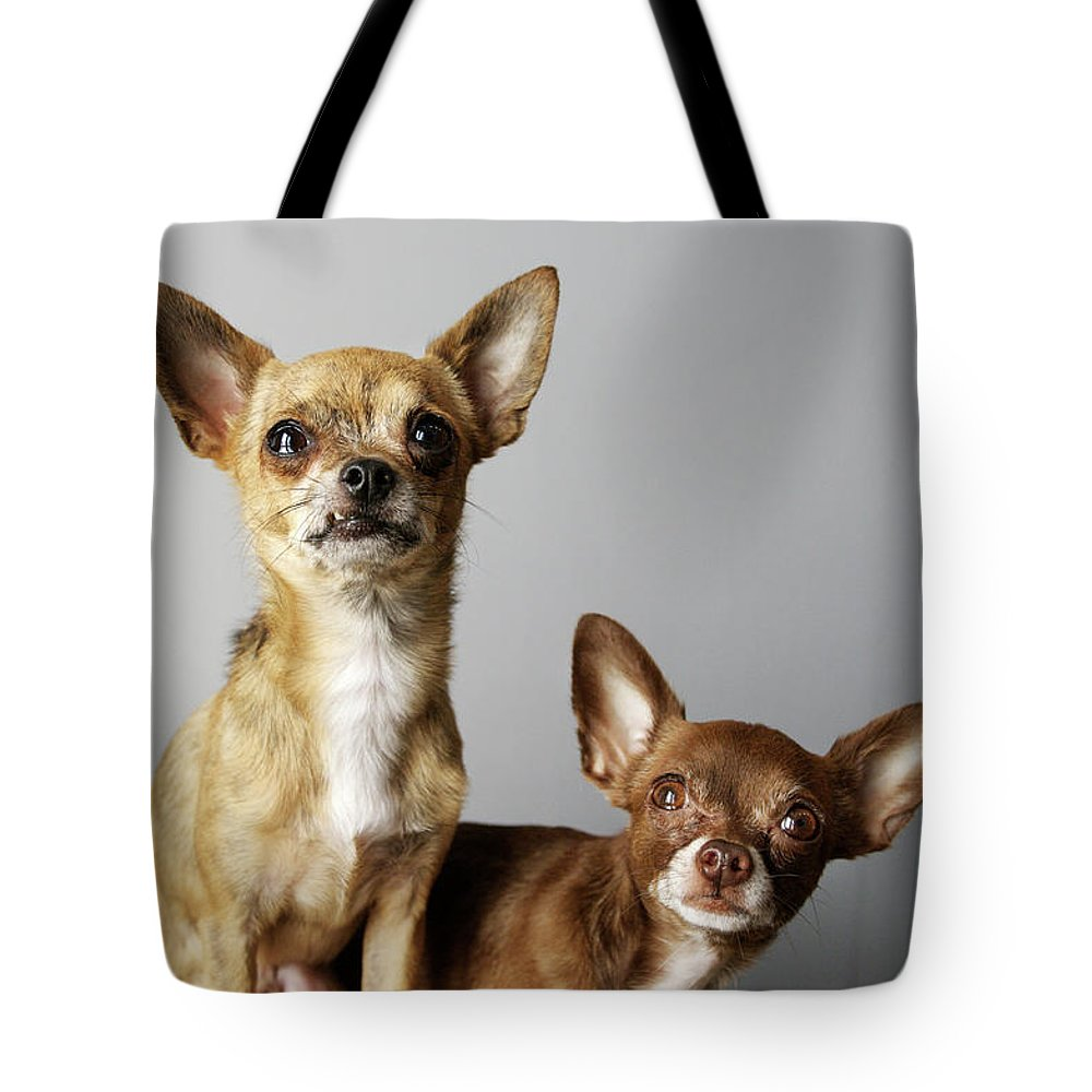 Animal Themes Tote Bag featuring the photograph All Dog, No Cat by Laura Layera