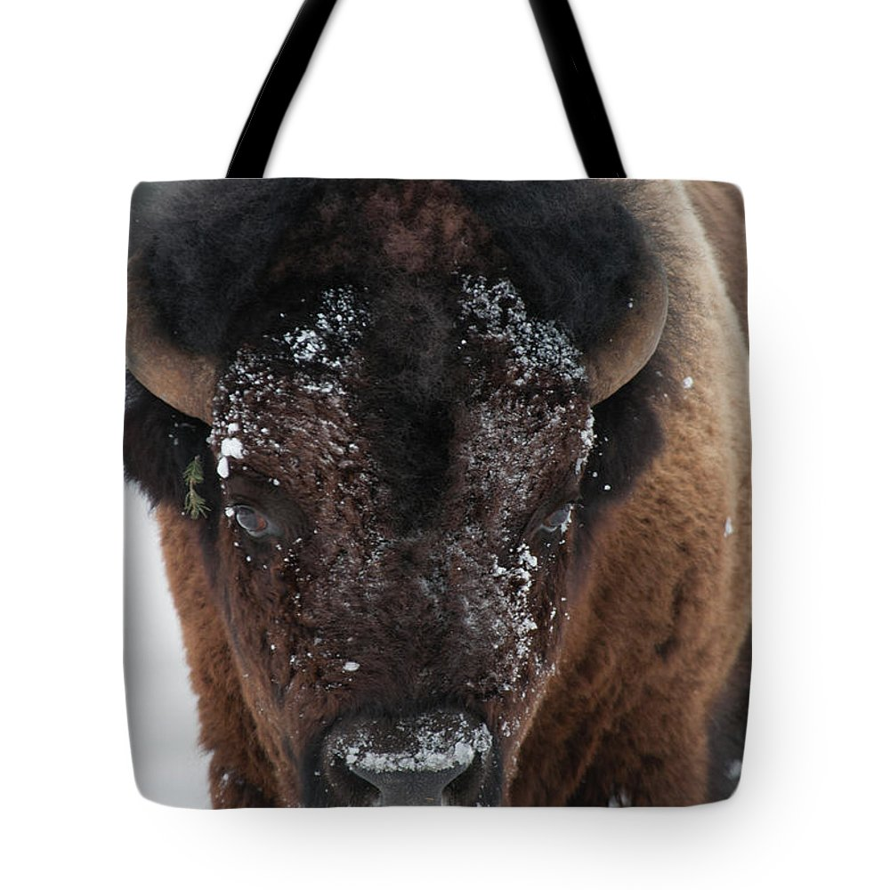 Bison Tote Bag featuring the photograph American Bison - Winter in Yellowstone by Frank Madia