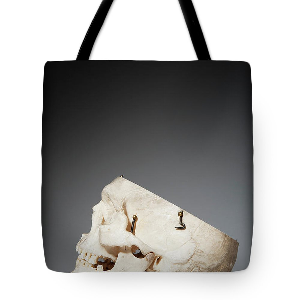 Sweden Tote Bag featuring the photograph Anatomical Model Of Human Skull by Johner Images