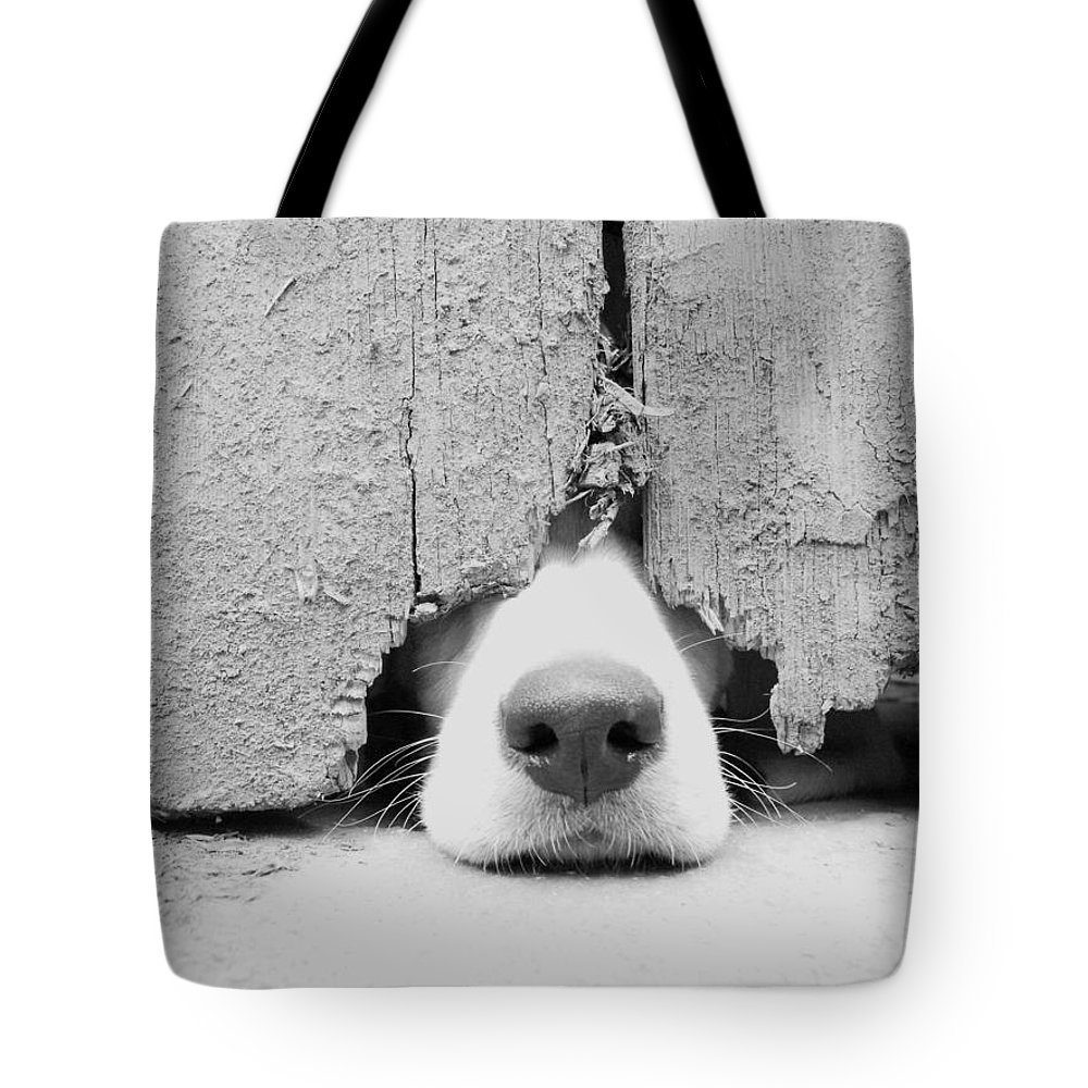 Pets Tote Bag featuring the photograph Anyone Out There by By Jake P Johnson