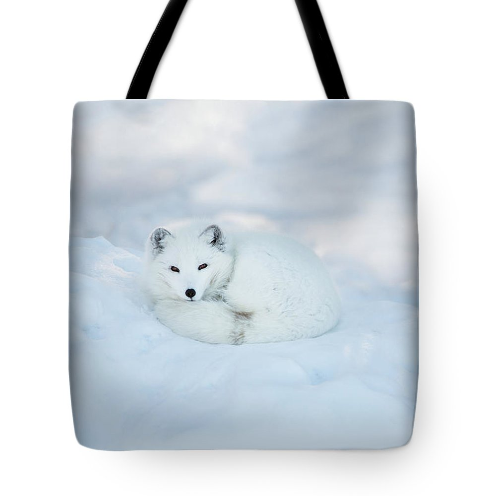 Svalbard Islands Tote Bag featuring the photograph Arctic Fox Resting In The Snow by Seppfriedhuber