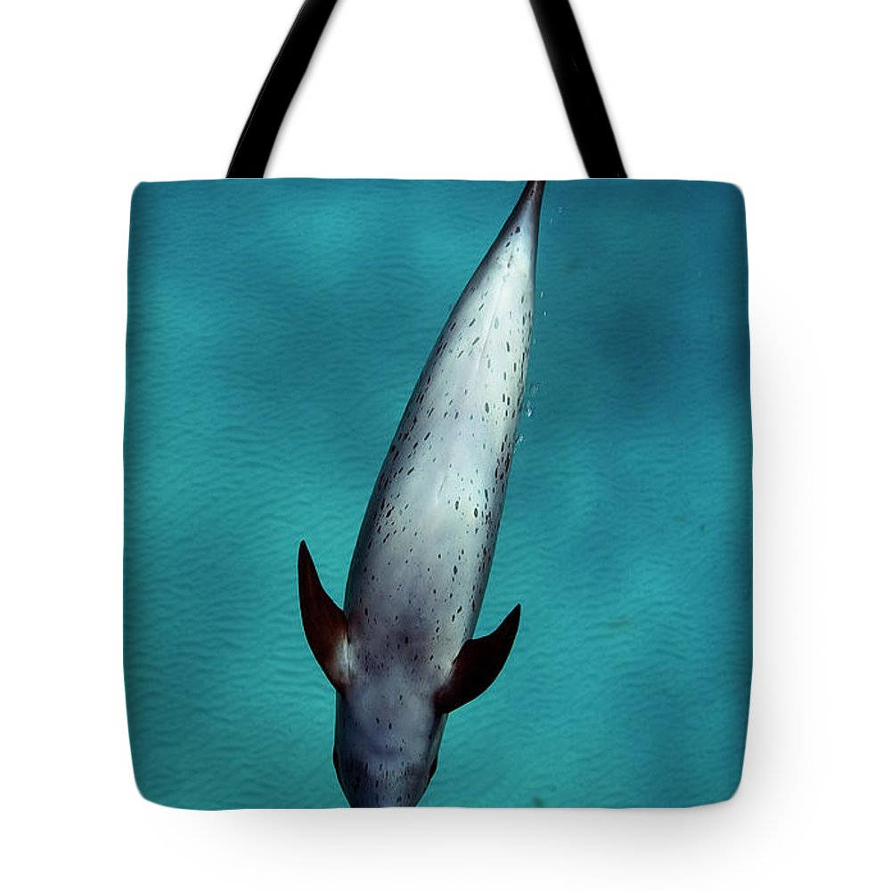 Animal Themes Tote Bag featuring the photograph Atlantic Spotted Dolphin by Todd Mintz Www.tmintz.ca