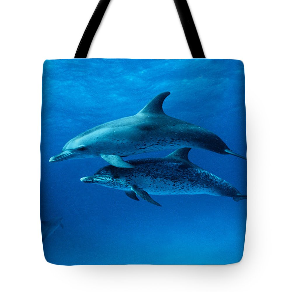 Color Image Tote Bag featuring the photograph Atlantic Spotted Dolphins,stenella by Gerard Soury