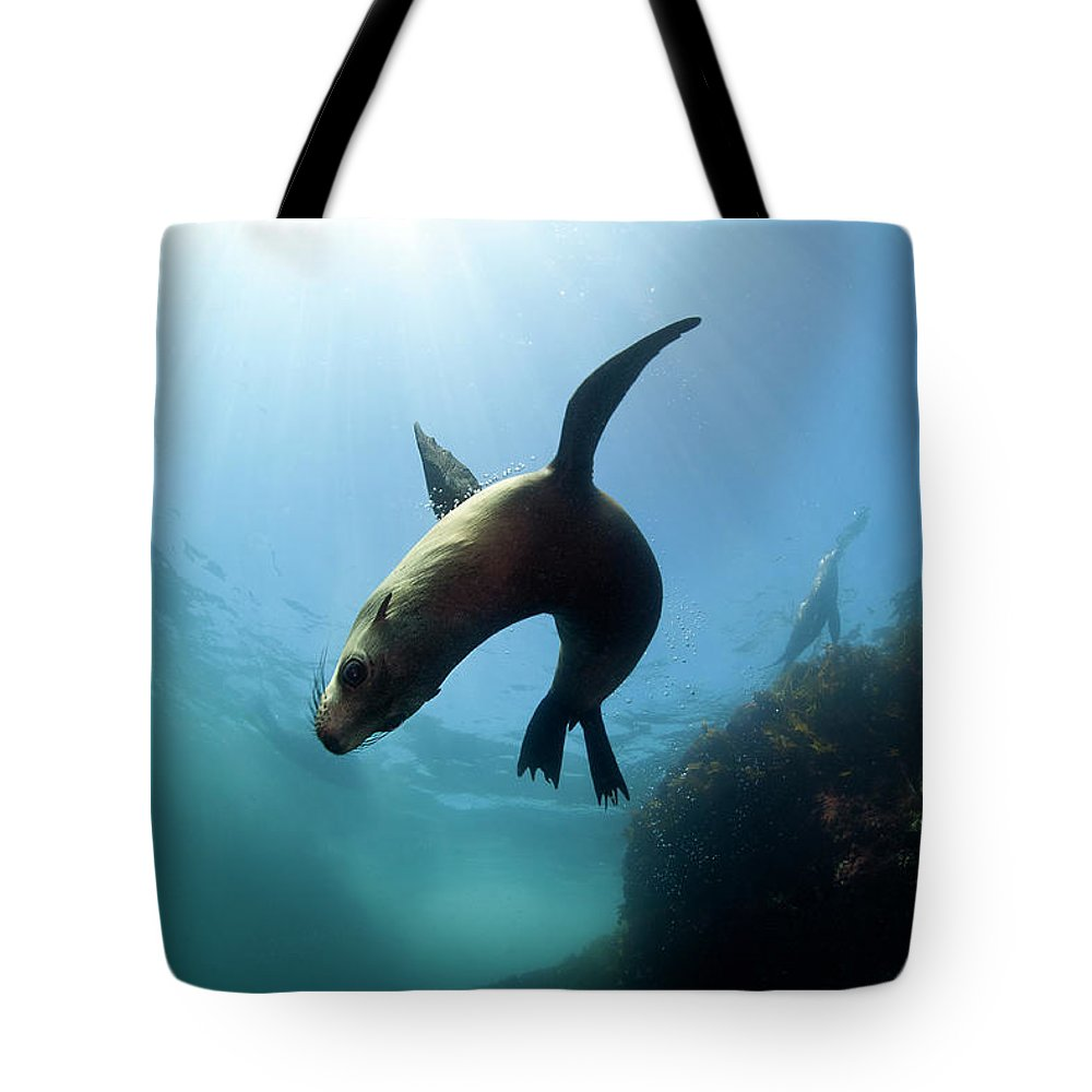 Underwater Tote Bag featuring the photograph Australian Fur Seal With Sun Burst by Alastair Pollock Photography