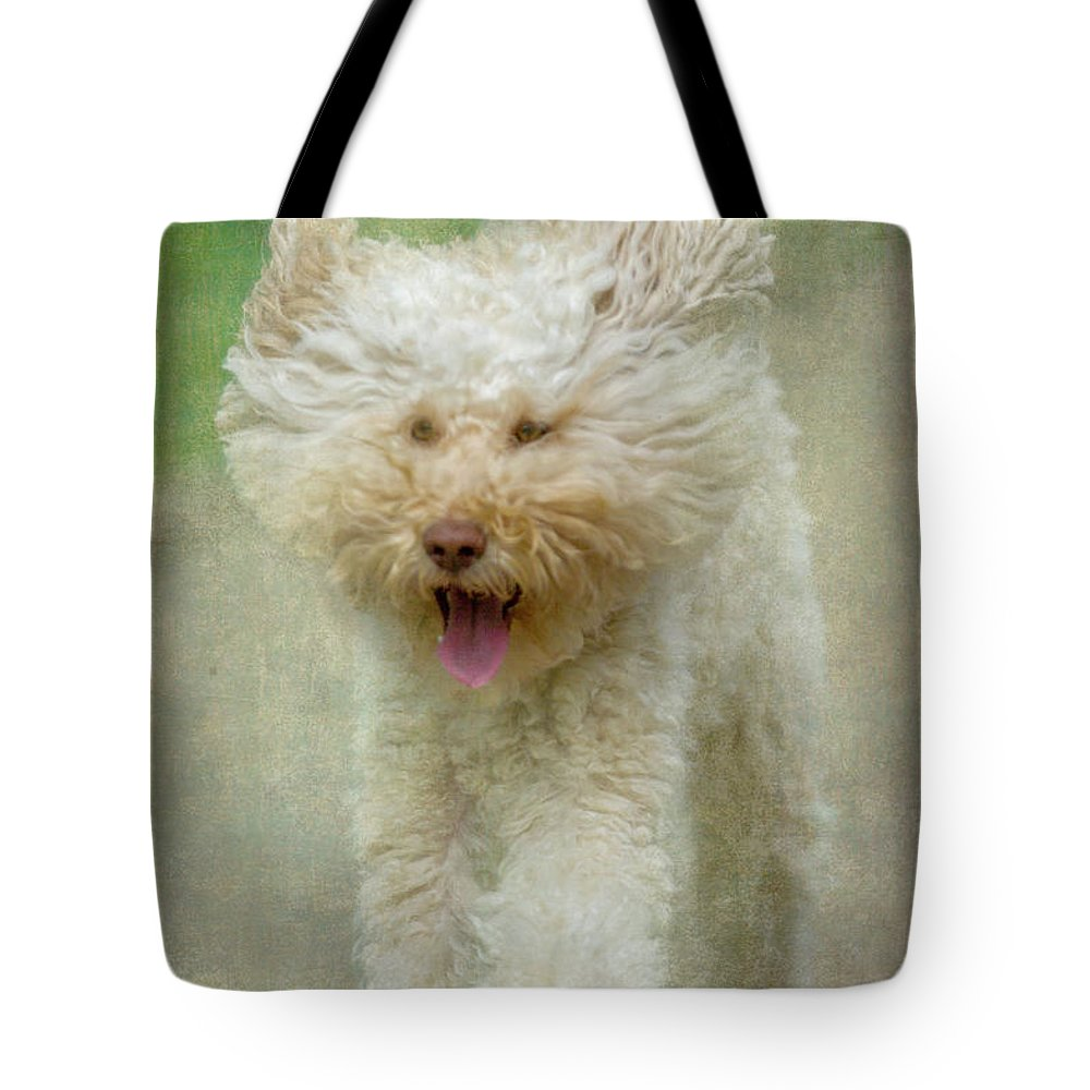Australian Labradoodle Tote Bag featuring the photograph Australien Labradoodle Dog by Heiko Koehrer-Wagner