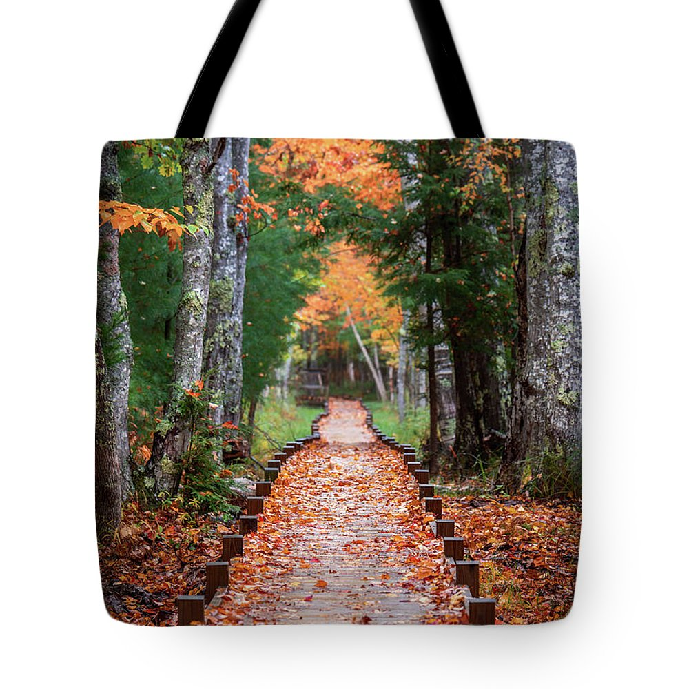 Acadia National Park Tote Bag featuring the photograph Autumn At Jesup Path by Jesse MacDonald