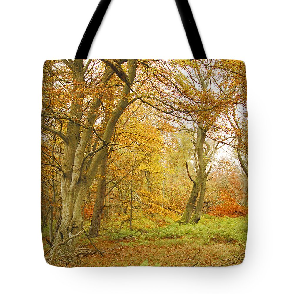 Trees Tote Bag featuring the photograph Autumn Colours by Victor Lord Denovan