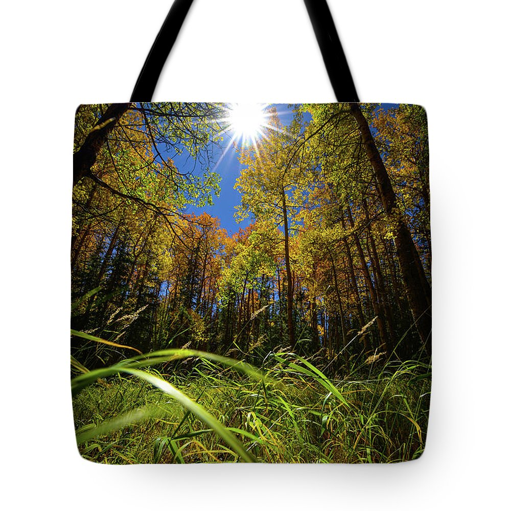 Autumn Tote Bag featuring the photograph Autumn Forest Delight by Christopher Thomas