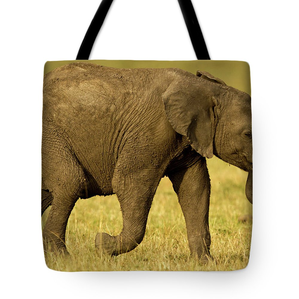 Following Tote Bag featuring the photograph Baby Elephant Following The Herd On The by Manoj Shah