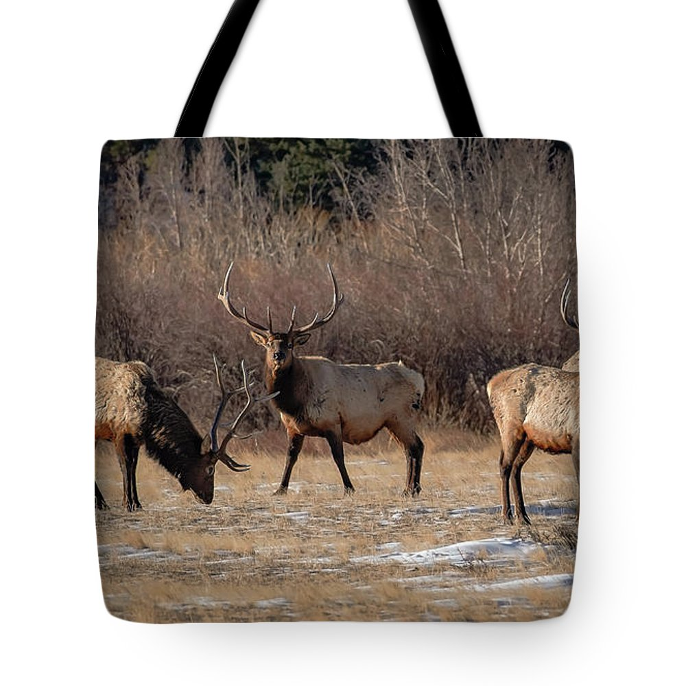 Colorado Tote Bag featuring the photograph Bachelors Out On The Town by Gary Kochel