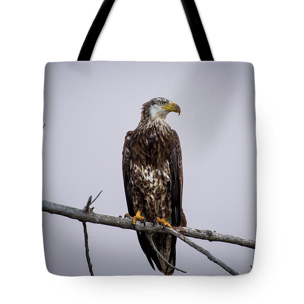 Eagle Tote Bag featuring the photograph Bald Eagle Portrait by Gary Kochel