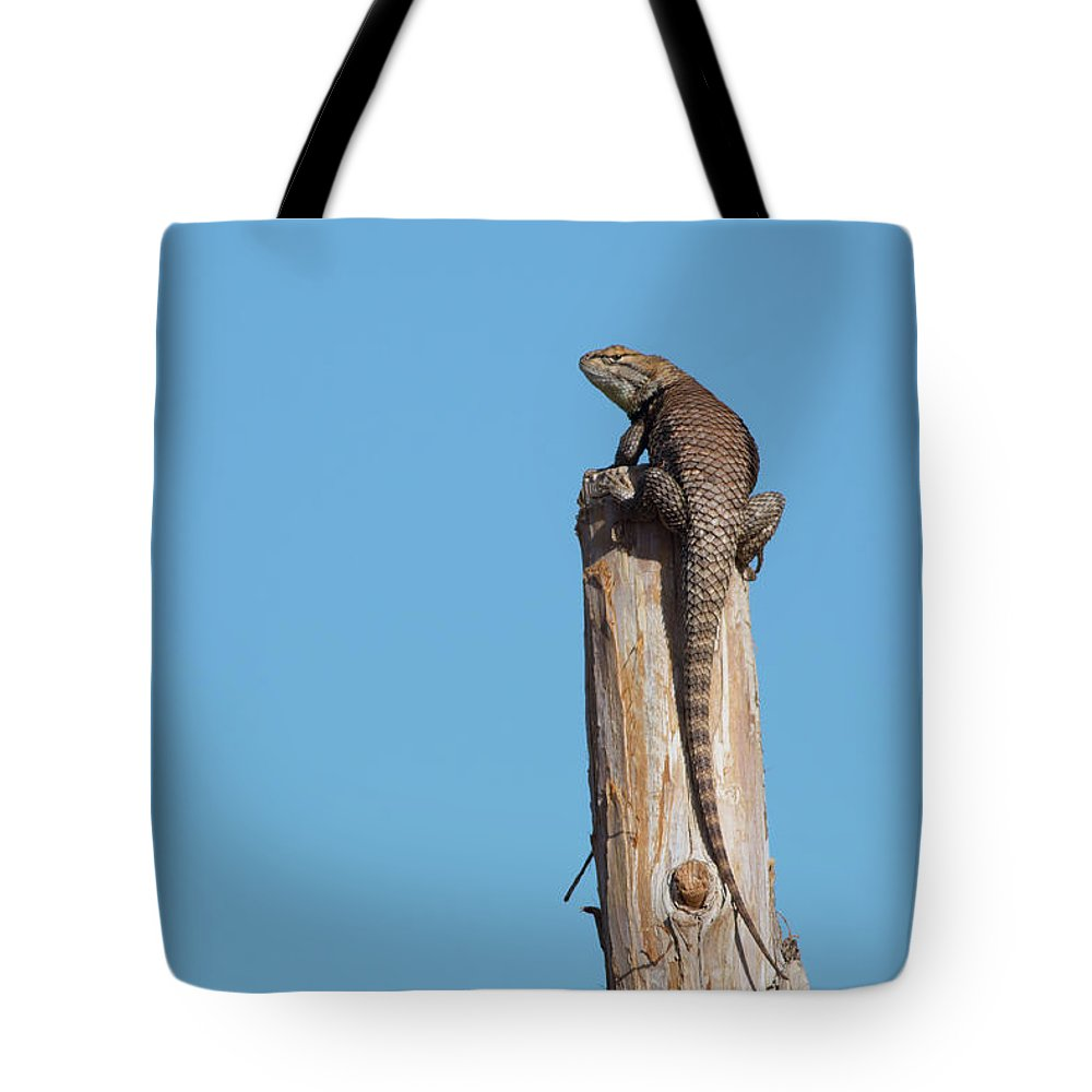 Lizard Tote Bag featuring the photograph Basking Lizard by Maria Jeffs