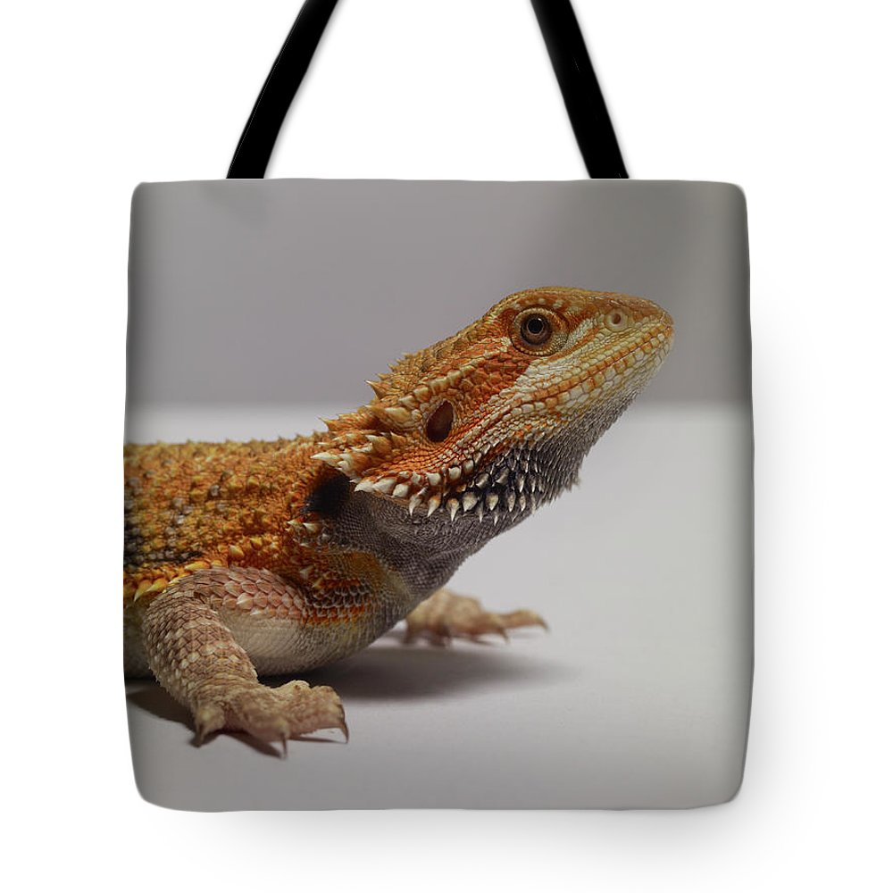 Alertness Tote Bag featuring the photograph Bearded Dragon by Dan Burn-forti