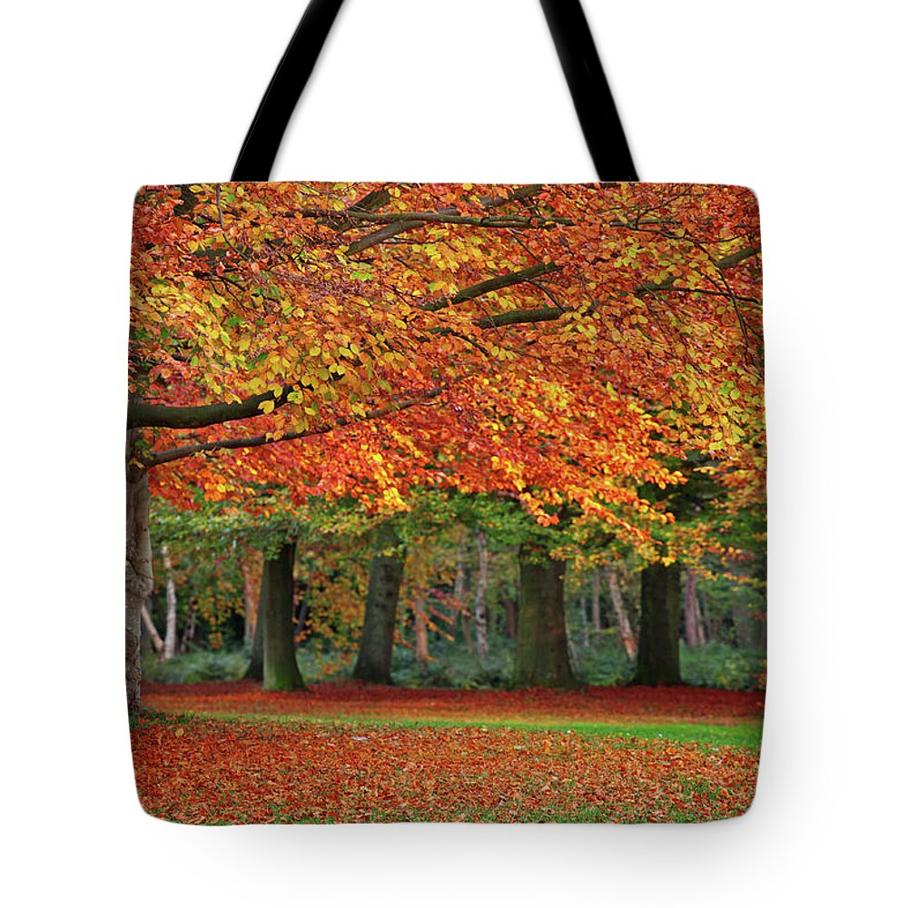Orange Color Tote Bag featuring the photograph Beautiful Autumn In Park by Lorado