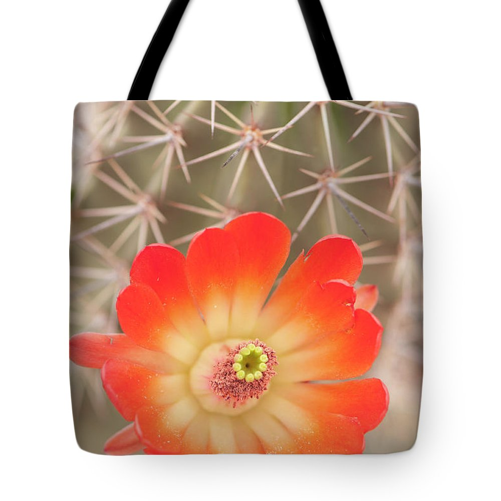 Orange Color Tote Bag featuring the photograph Beautiful Claret Cup Hedgehog Blossoms by Lokibaho
